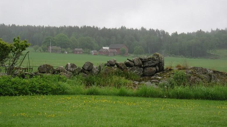 Kulturlandskap med stenmur