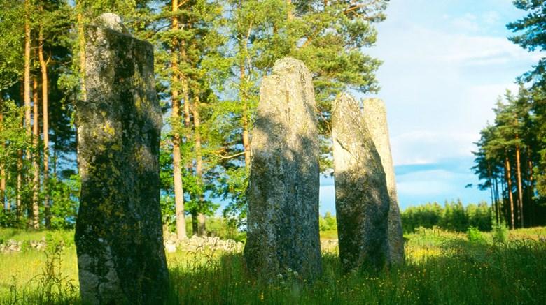 Stenehed gravgält i Munkedals kommun.
