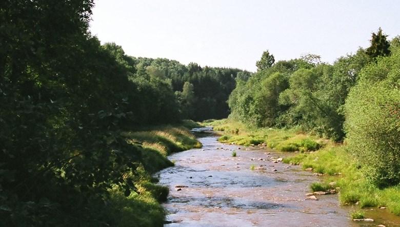 Vattendrag i lummig grönska
